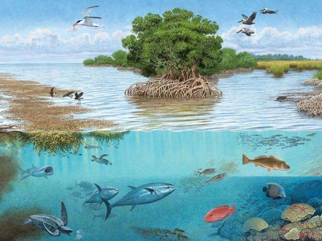 разнообразие видов разветвленные цепи питания в экосистеме являются