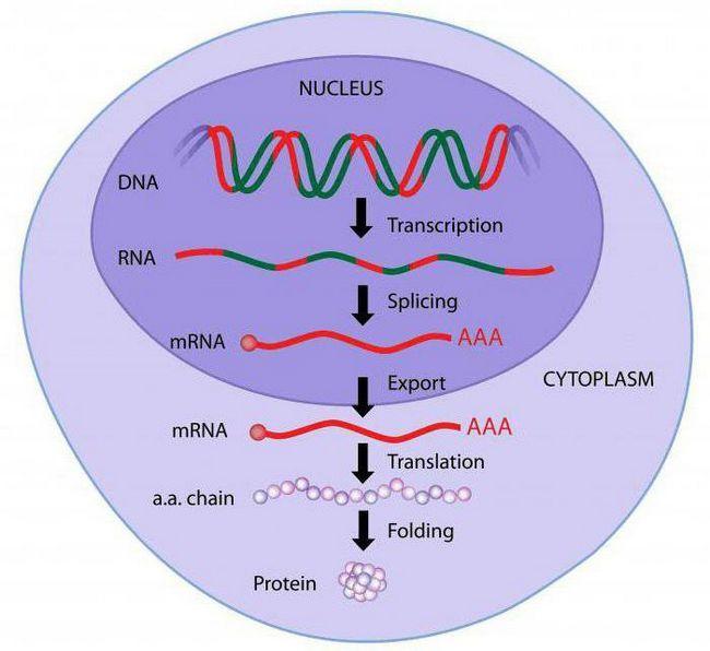 degeneracija genetskog koda što to znači