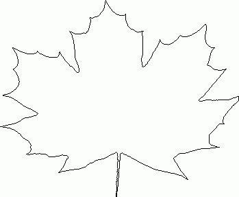 obris listova javorova