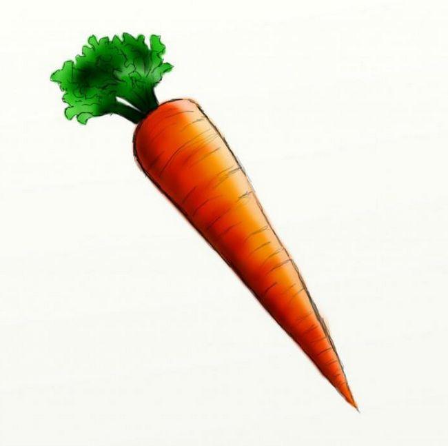 Kako crtati mrkvu