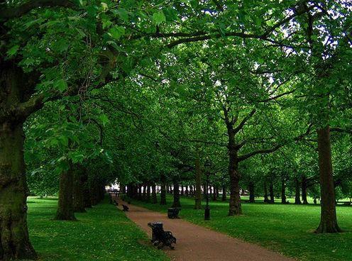 Зеленая зона отдыха. Леса зеленой зоны