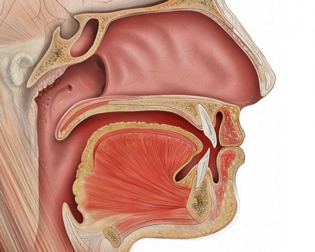 otvor koji vodi od usne šupljine do ždrijela