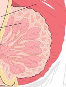 žljezdanog epitela