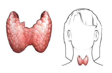 endokrinih žlijezda u ljudskom tijelu