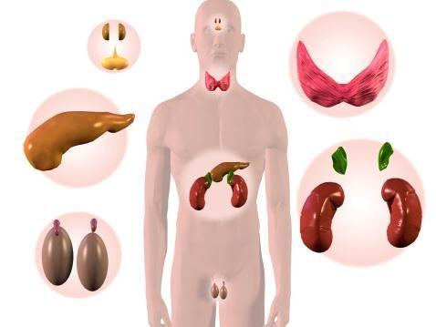 endokrine žlijezde imaju