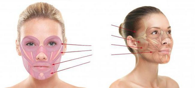 мимические мышцы головы