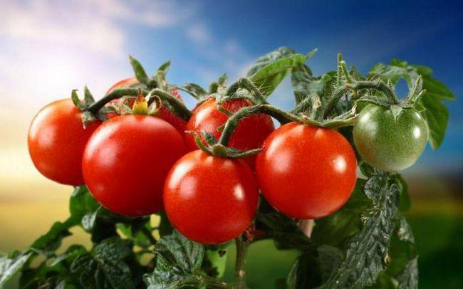 značenje riječi etimologija rajčice